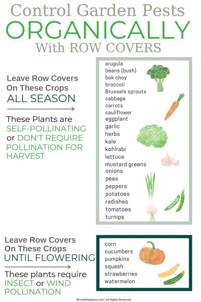 List of garden vegetable plants that don't require pollination and those that do require insect or wind pollination. Row covers can be left on crops that don't require pollination all season for pest control.