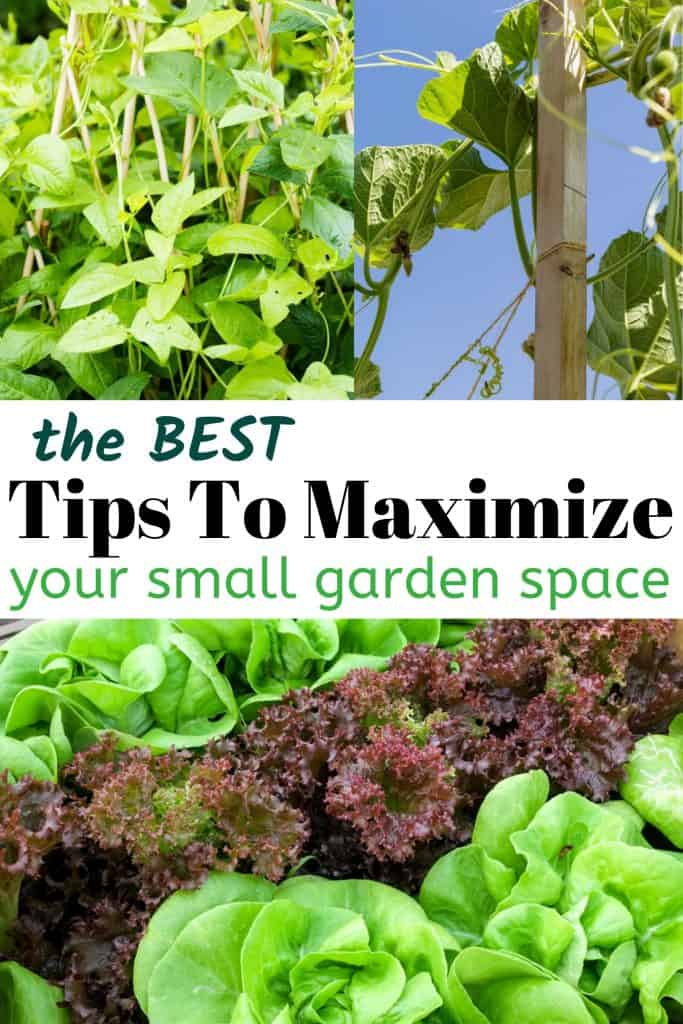 Tips For Maximizing Your Small Garden Space With Rows Of Lettuce And Trellis