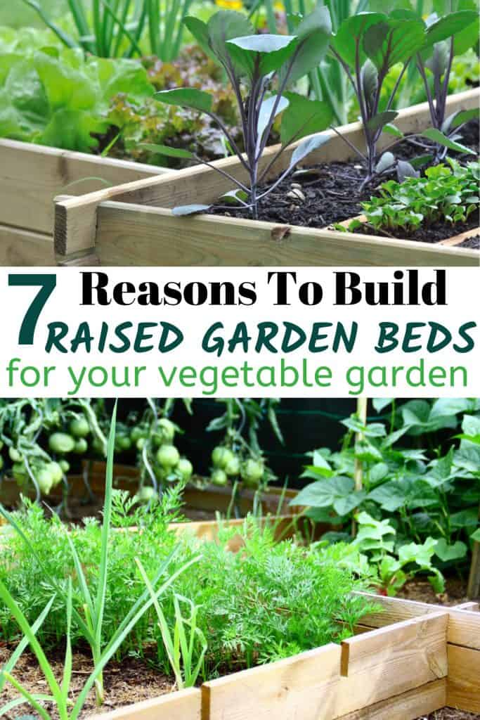 Raised Vegetable Garden Beds With Text 7 Reasons To build Raised Garden Beds For Your Vegetable Garden