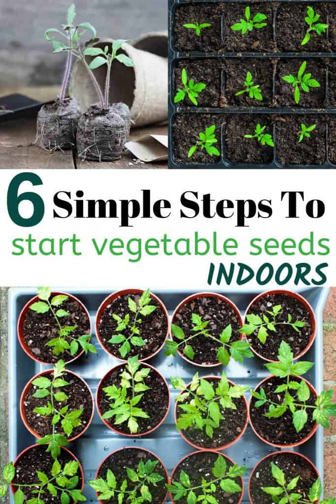 Six Simple Steps To Starting Vegetable Seeds Indoors With Vegetable Seedlings
