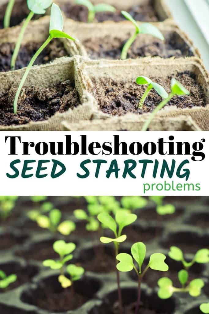 Troubleshooting Seed Starting Problems With Leggy Seedlings And Yellow Leaves