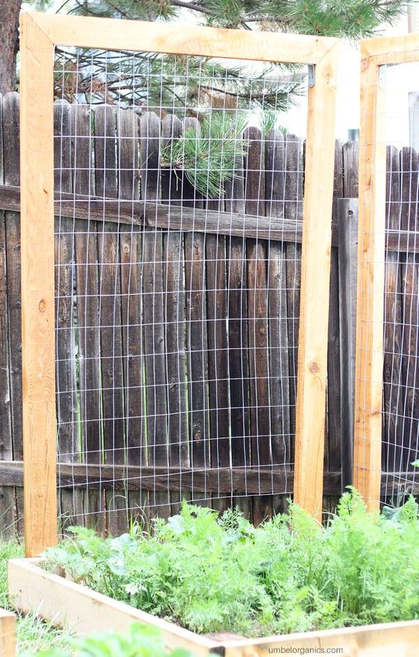 Vegetable garden trellis for cucumbers