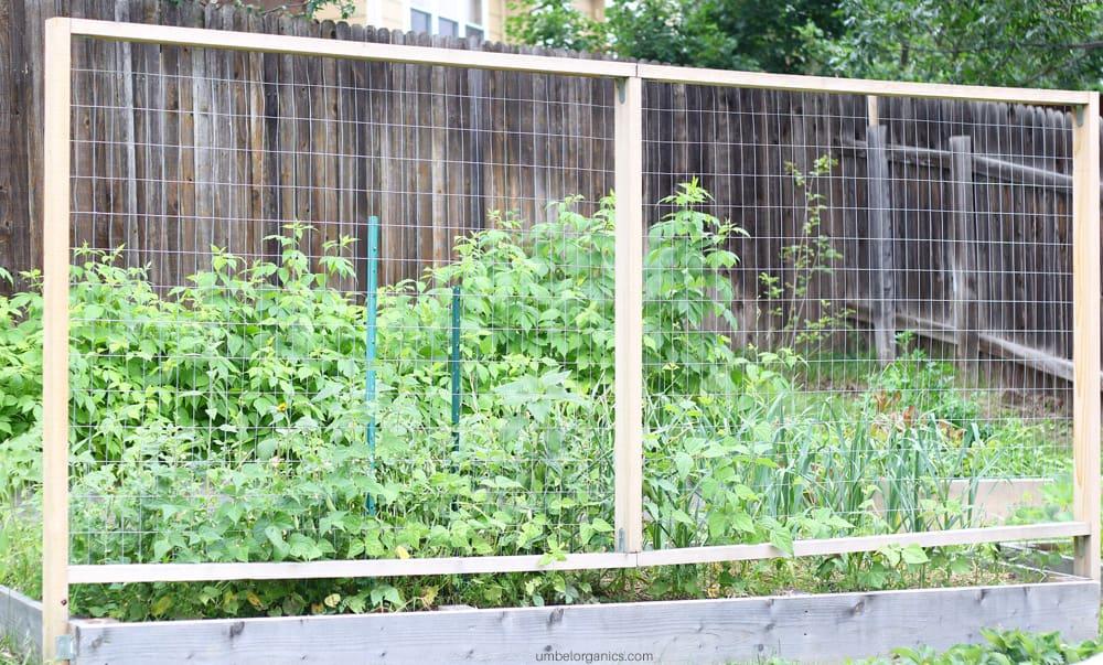 DIY garden trellis for pole beans
