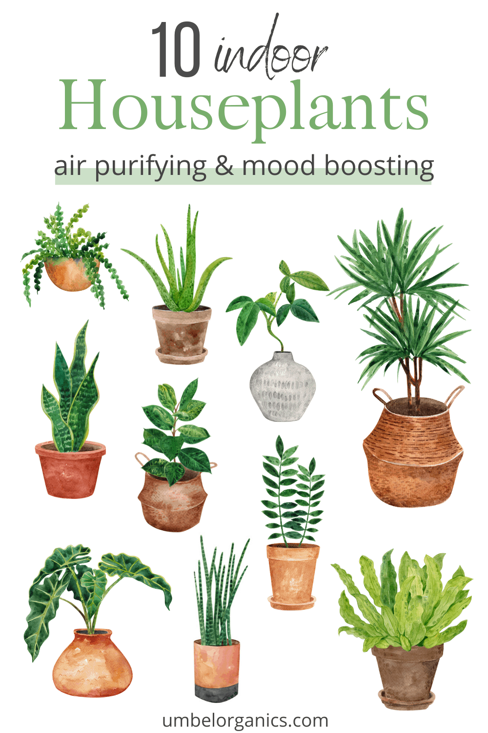 10 houseplant to boost mood and purify the air