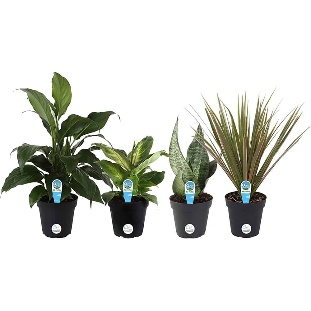 Set of 4 air purifying houseplants