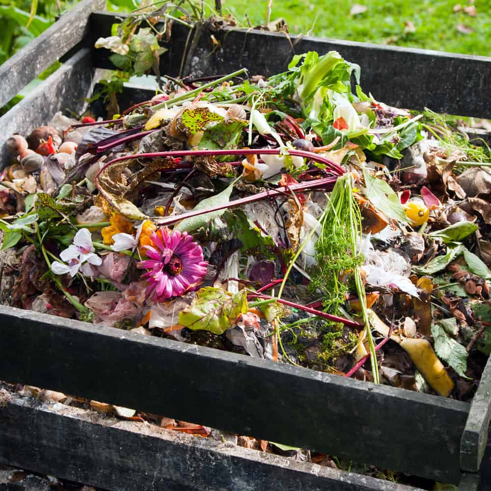 Backyard compost in wooden bin