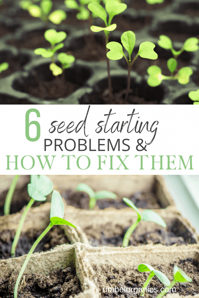 Seed starting problems and how to fix them