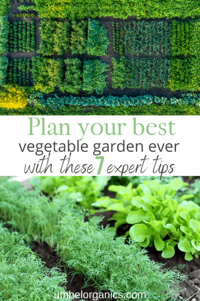 Plan your vegetable garden with these 7 expert tips