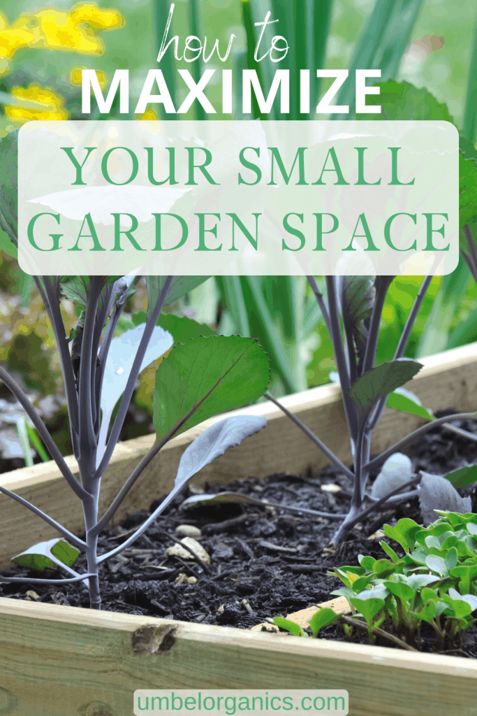 How to maximize your small garden space