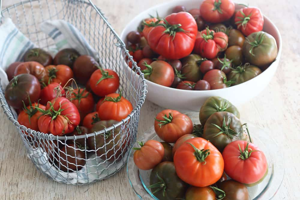 Baskets of heirloom tomatoes from garden