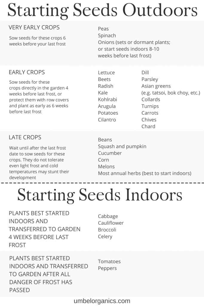 When to plant seeds outdoors and indoors