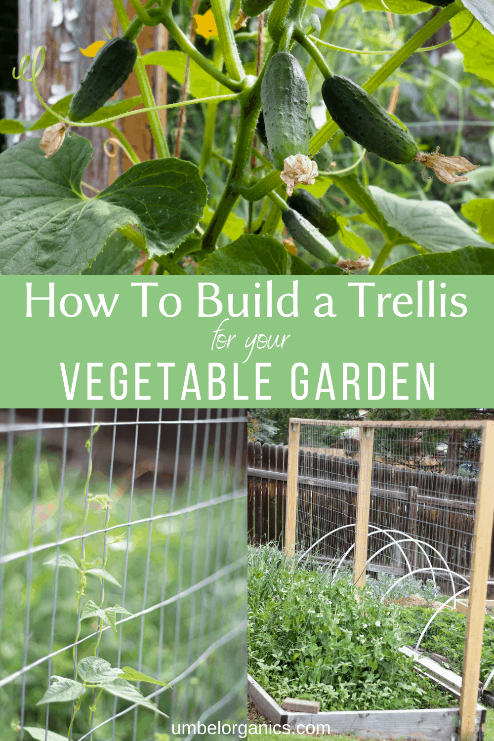 How to build a trellis for your vegetable garden with images of a trellis with cucumbers