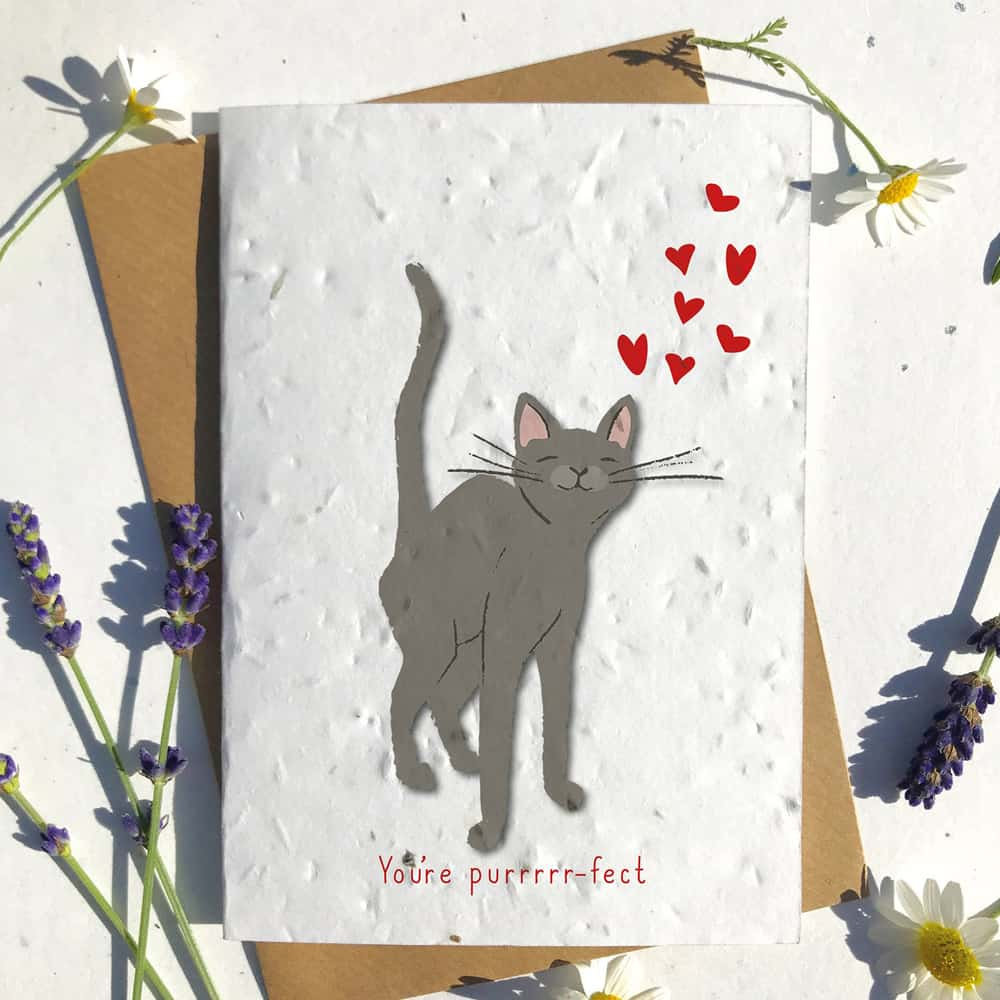Cat Heart Card