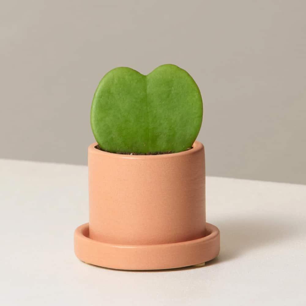 Heart Succulent