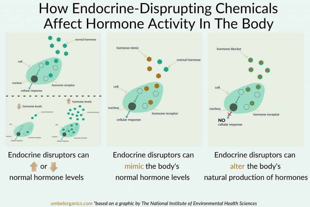 Infographic showing normal cells and how endocrine disrupting chemicals alter the function
